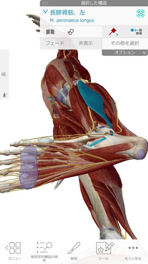 ヘルニアは誤診か-ヘルニア手術失敗か-ヘルニア手術で歩けなくなった女性の回復施術11