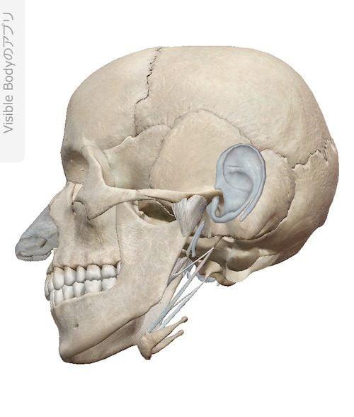 口を開ける時、噛む時に顎の痛み-治療方法_顎関節症や顎の痛みを治す整体院12a
