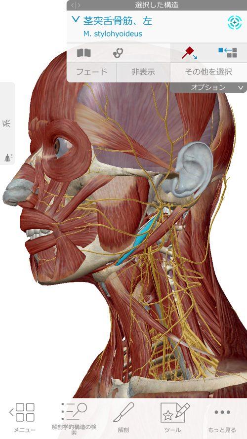 口を開ける時、噛む時に顎の痛み-治療方法_顎関節症や顎の痛みを治す整体院3