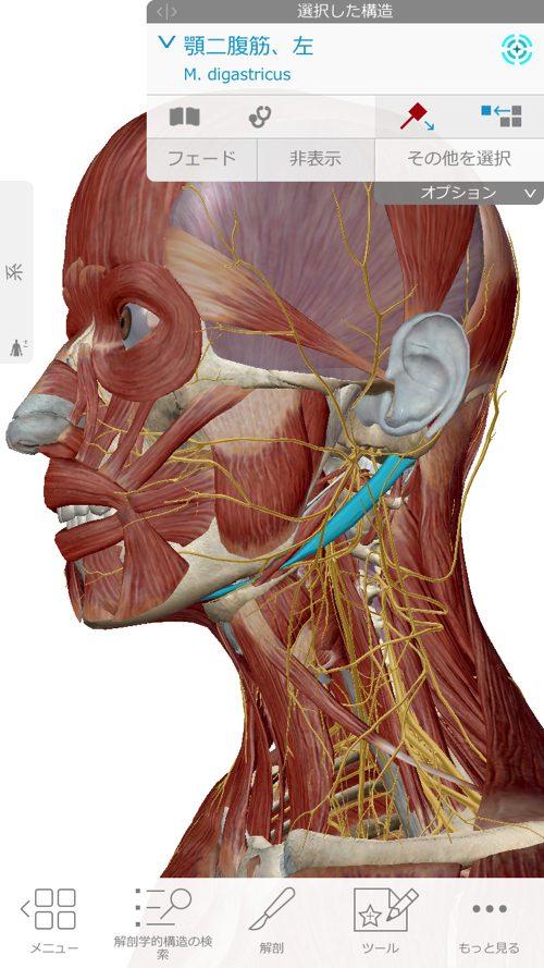 口を開ける時、噛む時に顎の痛み-治療方法_顎関節症や顎の痛みを治す整体院4