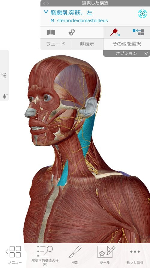 口を開ける時、噛む時に顎の痛み-治療方法_顎関節症や顎の痛みを治す整体院5