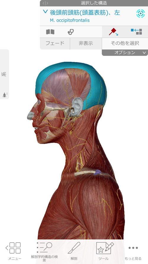 口を開ける時、噛む時に顎の痛み-治療方法_顎関節症や顎の痛みを治す整体院6