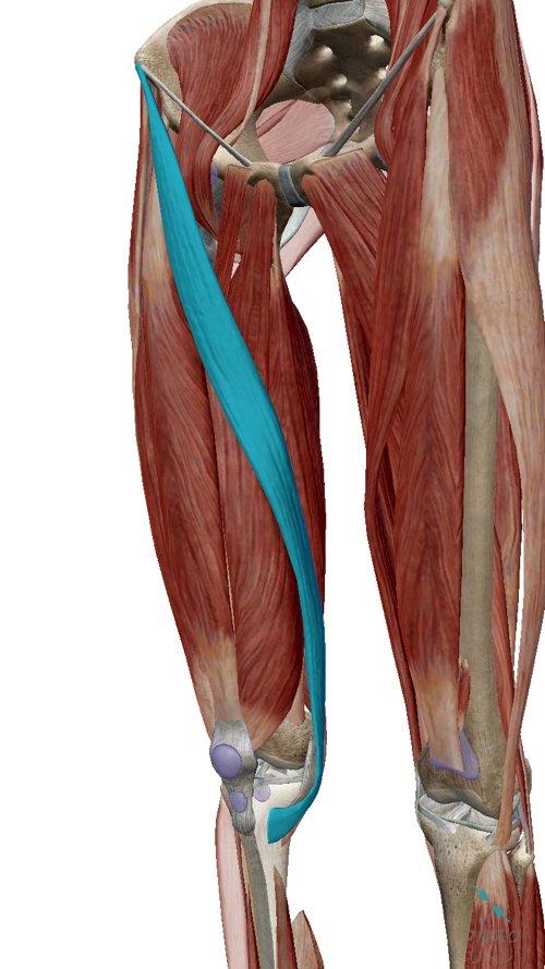 変形性ひざ関節症_膝の痛み_膝に水が溜まる-原因-治療方法_広島の整体院2 (2)