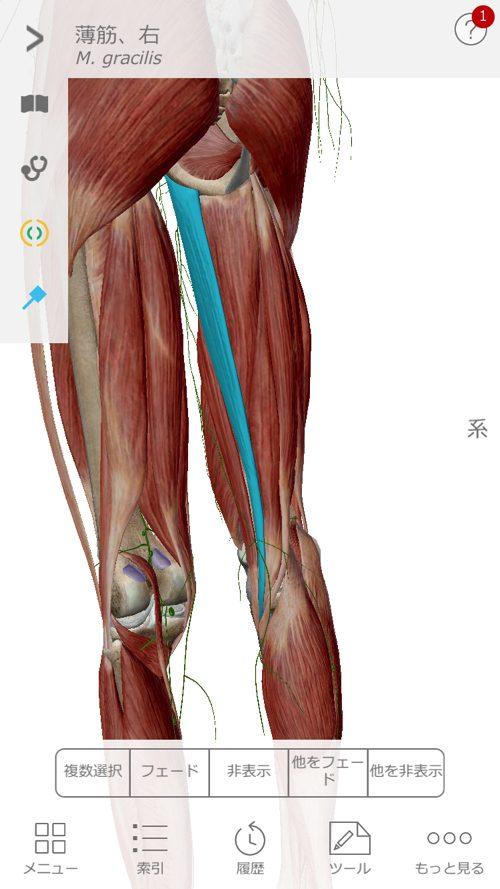 広島で椎間板ヘルニアの治療で有名な整体院の記録-腰の痛みが消えて治った例13