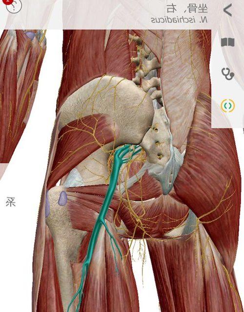 広島で椎間板ヘルニアの治療で有名な整体院-整体広島眞田流-治った例3-e1509226944274