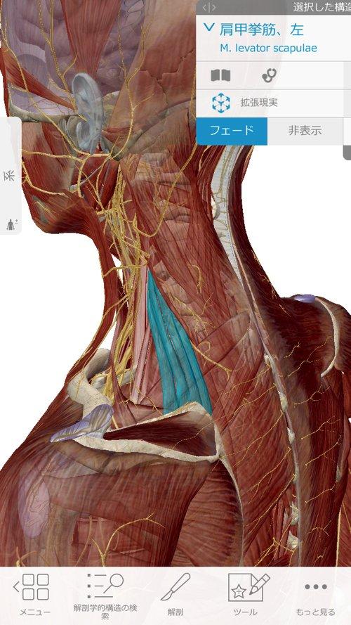 広島の肩の痛みを治す専門院-四十肩治療で有名な整体院