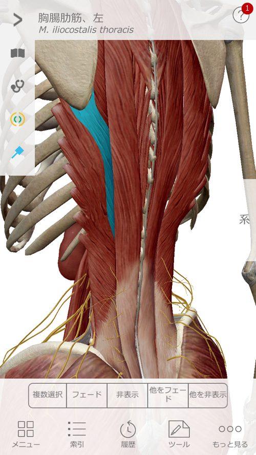 座ってから経つ際に腰が痛く歩くのも辛い状態になった_広島の腰痛治療で有名な整体院2