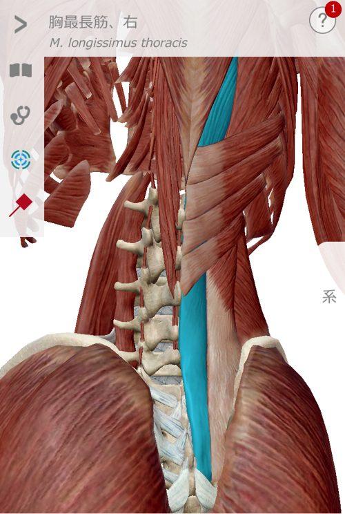 座ってから経つ際に腰が痛く歩くのも辛い状態になった_広島の腰痛治療で有名な整体院3