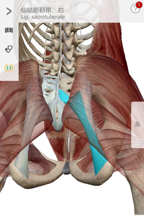整形外科では治らない椎間板ヘルニアの原因と治療方法_テレビでも紹介されて広島の有名整体師の施術記録