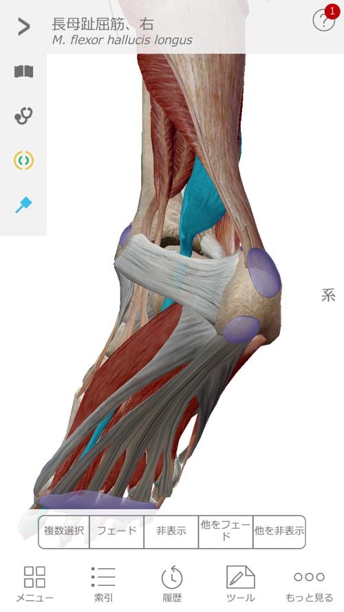 整形外科で治らない脊柱管狭窄症の原因と治療方法解説-広島の整体院の治った例