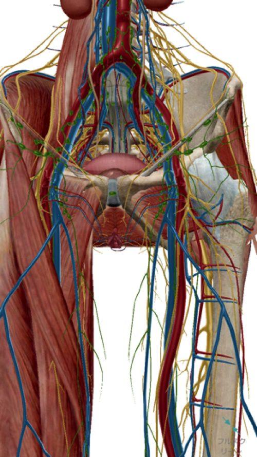 椎間板ヘルニアと脊椎狭窄症の原因と治療方法-広島で椎間板ヘルニア治療で有名な整体院の記録7