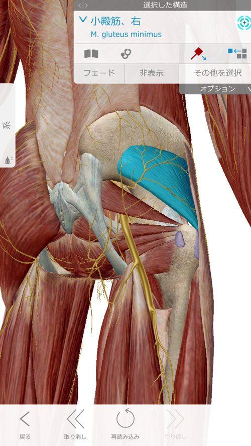 椎間板ヘルニアと脊椎狭窄症の原因と治療方法-広島で椎間板ヘルニア治療で有名な整体院の記録8
