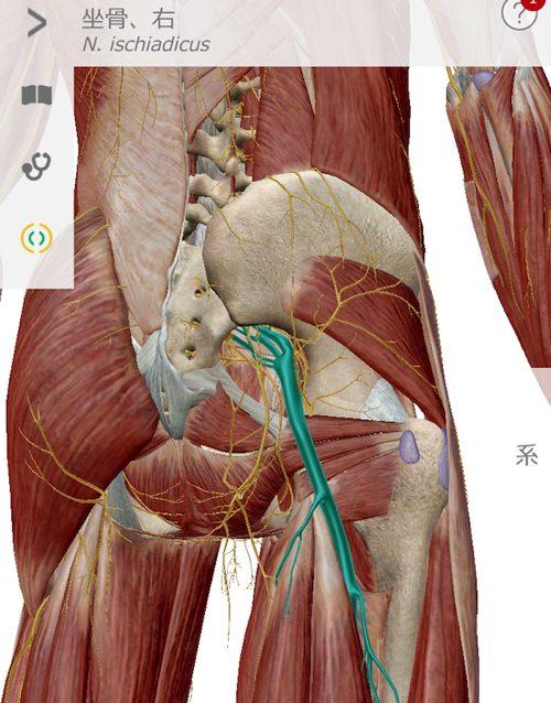 治らないヘルニアの原因と治療方法-広島の腰痛専門士の整体院の治った実例7