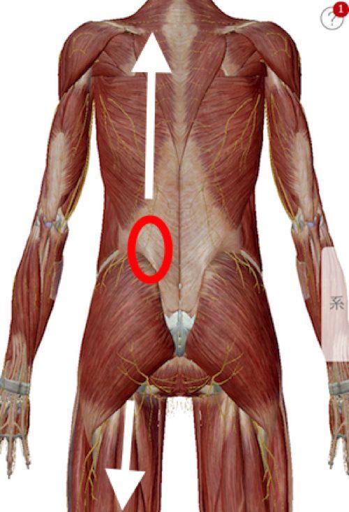脊椎狭窄症の腰の痛みと足のシビレの原因と治療方法_広島の有名な腰痛専門の整体院の治った霊12