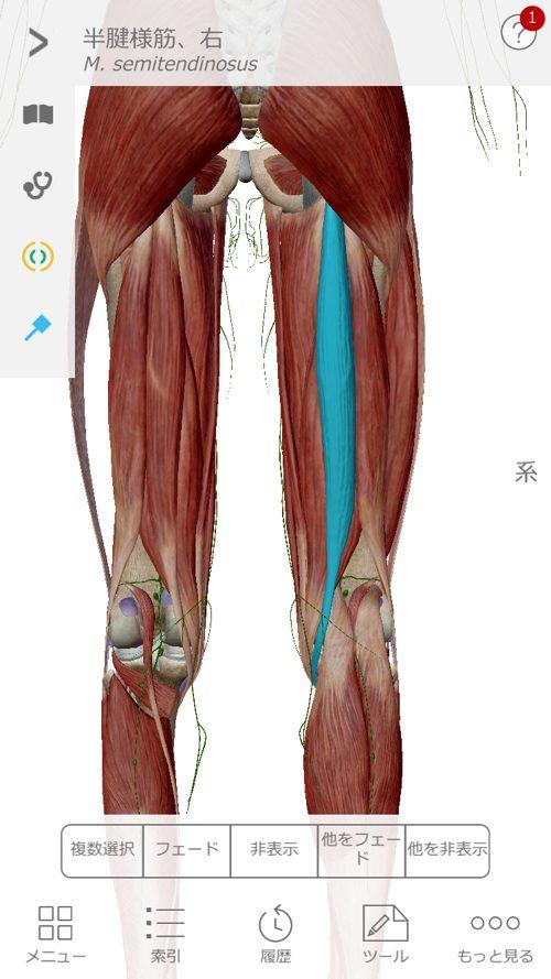 脊椎狭窄症の腰の痛みと足のシビレの原因と治療方法_広島の有名な腰痛専門の整体院の治った霊13