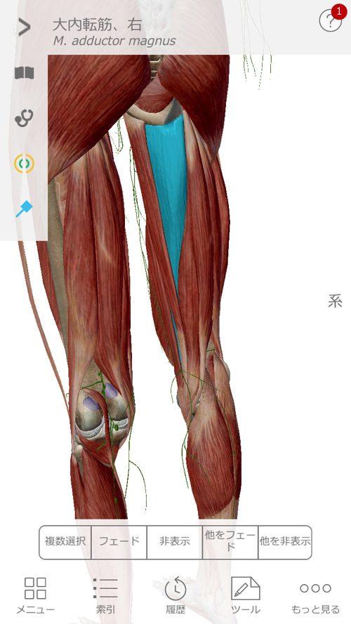 脊椎狭窄症の腰の痛みと足のシビレの原因と治療方法_広島の有名な腰痛専門の整体院の治った霊14