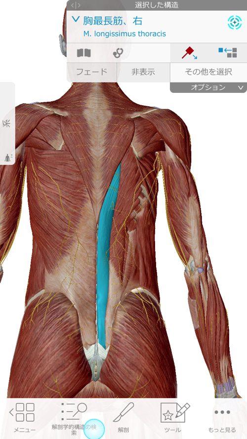脊椎狭窄症の腰の痛みと足のシビレの原因と治療方法_広島の有名な腰痛専門の整体院の治った霊15