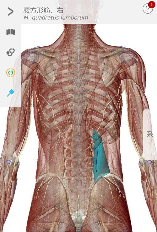 脊椎狭窄症の腰の痛みと足のシビレの原因と治療方法_広島の有名な腰痛専門の整体院の治った霊16