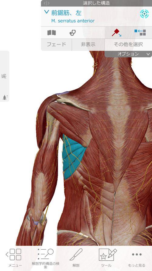 腕と肩の痛み-広島で四十肩の治療なら整体広島眞田流が有名