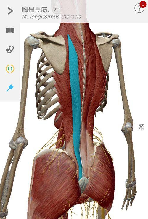 2ヶ月安静と言われた椎間板ヘルニアが治った例_広島でヘルニアの治療で有名な整体広島眞田流11