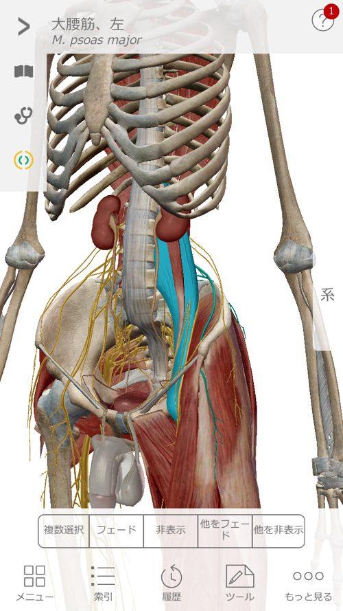2ヶ月安静と言われた椎間板ヘルニアが治った例_広島でヘルニアの治療で有名な整体広島眞田流12