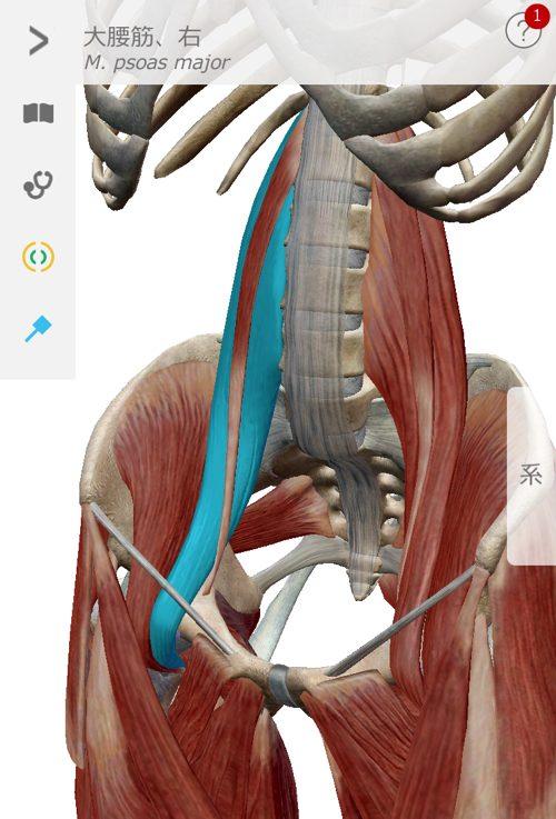 2ヶ月安静と言われた椎間板ヘルニアが治った例_広島でヘルニアの治療で有名な整体広島眞田流15