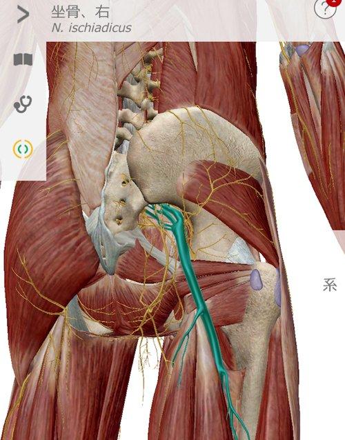 1整形外科で治らない脊柱管狭窄症の原因と治療方法解説-広島の整体院の治った例
